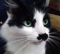 gato que sofre de câncer
